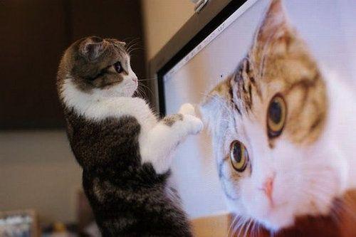 【寝不足注意!】見始めると止まらない!天才が主人公のアニメまとめのサムネイル画像
