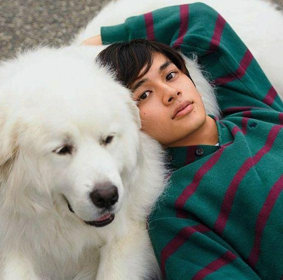期待の若手イケメン俳優北村匠海さん出演の映画についてまとめのサムネイル画像