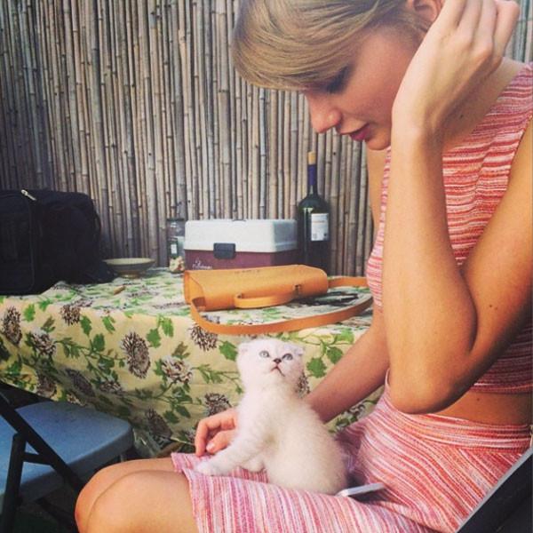 彼氏よりも猫?テイラー・スウィフトの恋路を邪魔する愛猫2匹のサムネイル画像