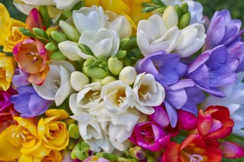 紀香さんもあの人に・・・あなたも花言葉を贈って大切な人を笑顔に!のサムネイル画像