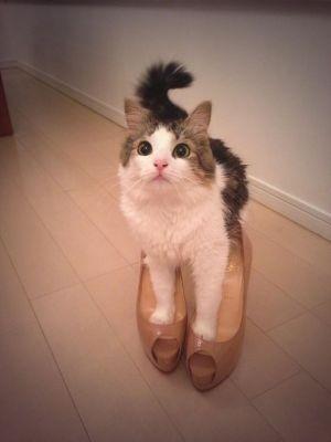 猫が大好き!ダレノガレ明美のかわいい猫と暮らす私生活をご紹介◎の画像