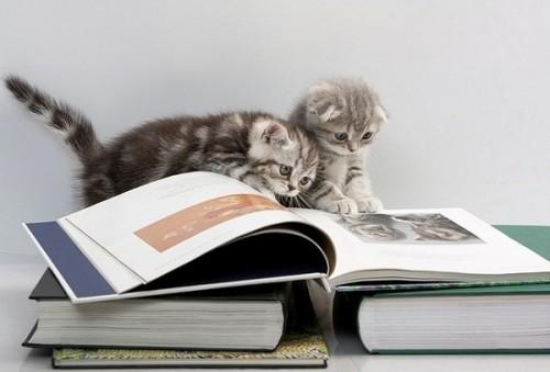 猫が好きじゃなくても読んでおきたい。猫が登場するおすすめ漫画5選のサムネイル画像