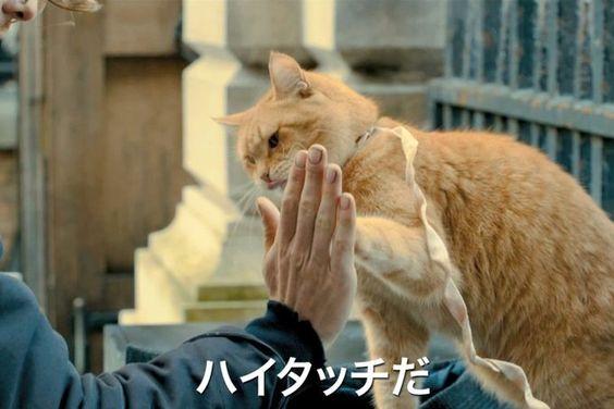 猫が物語を要を担う映画!2017年の猫洋画おススメの2作をご紹介!のサムネイル画像