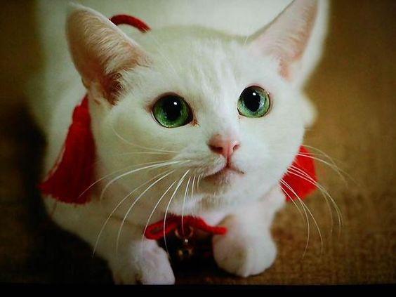 異例の時代劇?大人気ペット映画「猫侍」シリーズのDVDをご紹介。のサムネイル画像