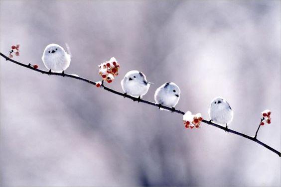 冬休みは家族でまったり映画鑑賞!寒い冬にはこれがイチバン!のサムネイル画像