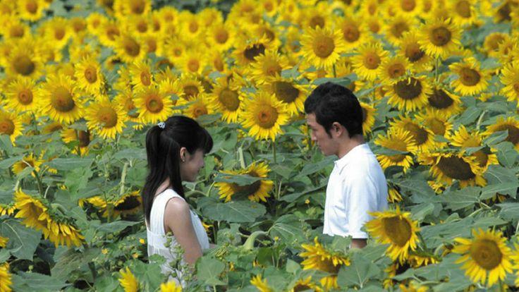 胸キュン作品から感動物語まで♪おすすめの恋愛映画をご紹介!のサムネイル画像