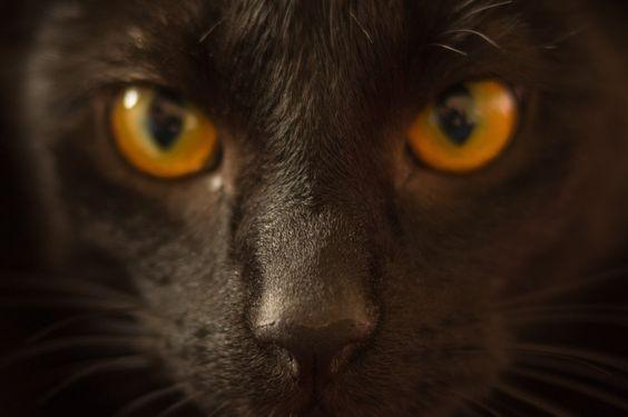 キャットアイ症候群っていったい何?ネコみたいな顔になるって本当?のサムネイル画像