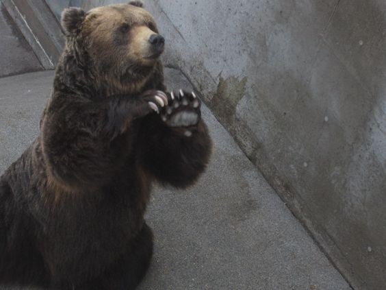 熊の手の料理とは?中国の伝統料理の味は?値段は高値!のサムネイル画像