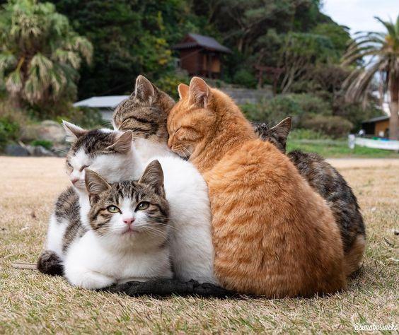 猫の夢占いまとめ!なつく・死ぬ・抱っこする場合の夢占いの意味とは?のサムネイル画像