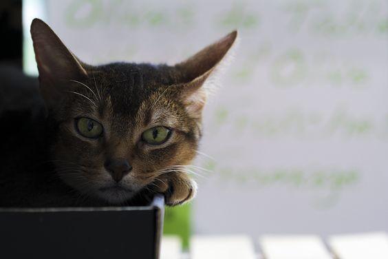 「ねこですよろしくおねがいします」の意味とは?元ネタをご紹介!のサムネイル画像