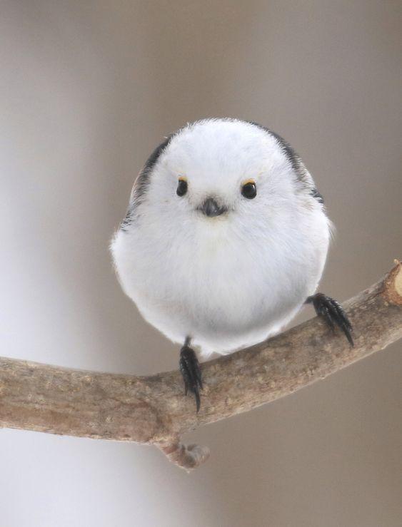 ネット上で鳴く鳥「ねもうす鳥」とは?現在(2021)も鳴いている?のサムネイル画像