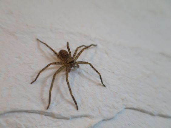 家の中でクモを見つけたらどうする?駆除する?そのまま?のサムネイル画像