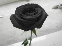 「復讐・報復・裏切り…」知っておきたい『怖い花言葉』をもつ花とは?のサムネイル画像