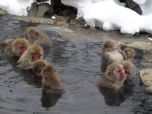 行ってみたい!全国の人気日帰り温泉おススメランキングトップ5!のサムネイル画像