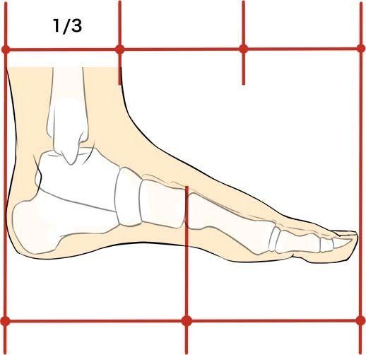 足のサイズと身長って関係するの?芸能人を測りにして徹底調査!のサムネイル画像