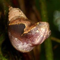 蛇の夢占いまとめ!蛇に噛まれるのは不吉なの?宝くじが当たる?の画像