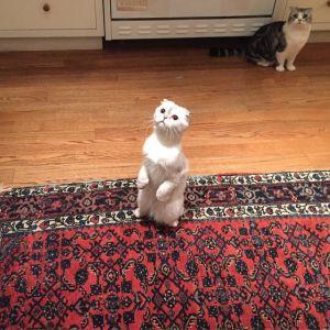 テイラー・スウィフトの愛猫たち